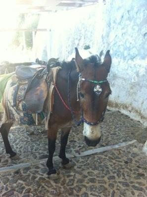 Brave donkey...